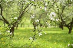 Spring. Belarus. Minsk. Loshitskiy Park. Spring in the city stock image
