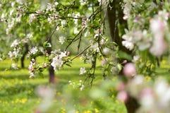 Spring. Belarus. Minsk. Loshitskiy Park. Spring in the city stock photos