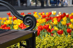 Spring bench. Openwork bench element on the background of blooming tulips Royalty Free Stock Image