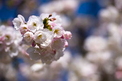 Spring bewitching tenderness Royalty Free Stock Photography
