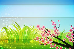 Spring bg Stock Photo