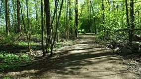 Spring bicycle ride in the woods stock footage