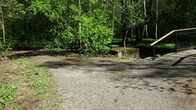 Spring bicycle ride in the woods stock video