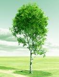 Spring birch. Beautiful spring birch. 3d image Royalty Free Stock Image
