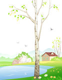 Spring birch. Illustration of a spring landscape Stock Photography