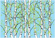 Spring birch trees illustration. Birch forest and blue sky. Stock Image