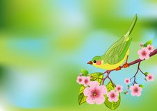 Spring bird background Royalty Free Stock Photos