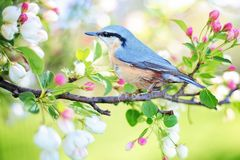 Spring Bird, Bird, Spring, Blue Stock Photo