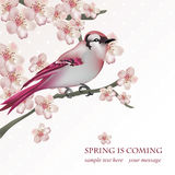Spring bird on blossom cherry tree branch Vector illustration. Beautiful Postcard for Mother`s Day, Birthday Royalty Free Stock Photo