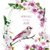 Spring bird on blossom cherry tree branch Vector illustration. Beautiful Postcard for Mother s Day, Birthday Stock Image