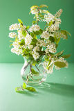 Spring bird-cherry blossom in vase over green background Royalty Free Stock Photos