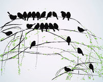 Spring birds. Silhouettes of birds sitting on branches - vector illustration Stock Photos