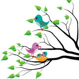 Spring birds Stock Photo