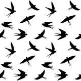 Spring birds Stock Image