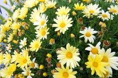 Spring Bloemen 1 op Royalty-vrije Stock Fotografie