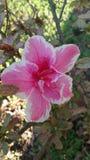 Spring bloemen in bloei op Royalty-vrije Stock Afbeeldingen