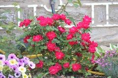 Spring bloemen in bloei op Stock Afbeelding