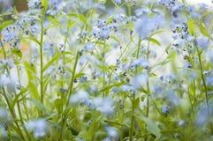 Spring bloemen op Royalty-vrije Stock Foto