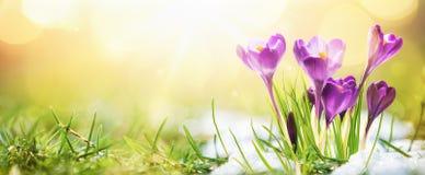 Spring bloemen in zonlicht op Royalty-vrije Stock Afbeeldingen