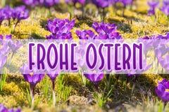 Spring bloemen in zonlicht op Gelukkige Pasen Duits-vertaling: Frohe Ostern stock fotografie