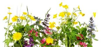 Spring bloemenpanorama op stock foto