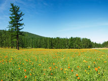 Spring bloom. Blooming meadow, forest and blue sky Royalty Free Stock Photos