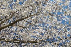 Spring in bloom Royalty Free Stock Images