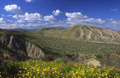 Spring bloom in Anza-Borrego. Spring flowers in Anza-Borrego Desert State Park near San Diego stock image