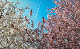 Spring bloom Stock Image