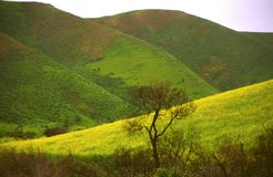 Spring bloom in coastal hills of California Stock Photos