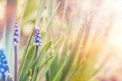 Spring bloom flowers. Soft bright colorful background. Toned royalty free stock images