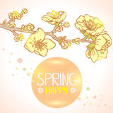 Spring bloom Royalty Free Stock Photos