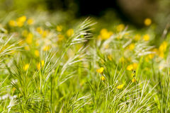 Spring bloom of meadow yellow and white flowers Stock Image