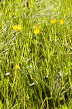 Spring bloom of meadow yellow and white flowers Royalty Free Stock Photos