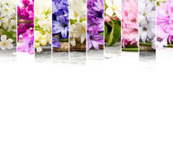 Spring Bloom Mix Stock Photo