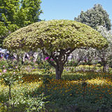 Spring bloom in the park Alhambra Royalty Free Stock Photo