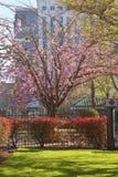 Spring bloom in Portland Oregon. Stock Photo