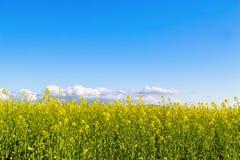 Spring in bloom Stock Image