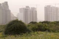 Spring bloomimg field and new skyscraper buildings in sandstorm. Spring bloomimg field and new residential neighborhood in Israel in Sandstorm Hamsin. Netania Royalty Free Stock Images