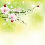 Spring blooming Royalty Free Stock Images