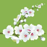 Spring blooming. Flower illustration for your design Royalty Free Stock Photos