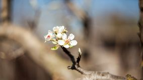 Spring blooming on the branches. In a beautiful day Stock Image