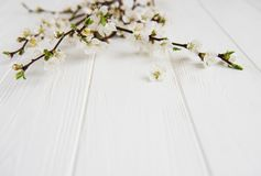 Spring blooming branches Royalty Free Stock Images