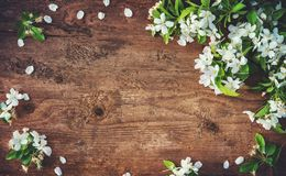 Spring blooming branches on wooden background Stock Image