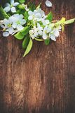 Spring blooming branches on wooden background Royalty Free Stock Images
