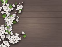 Spring blooming cherry branch on old wooden background. Spring blooming cherry branch on white old wood background. Blank for advertising flyer or invitation stock illustration