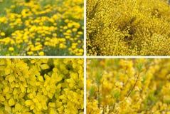 Spring blooming. Flower bokeh. Royalty Free Stock Image