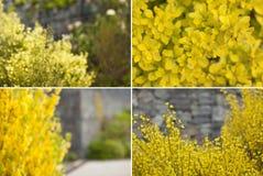 Spring blooming. Flower bokeh. Stock Photography
