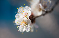 Spring blooming flowers branch Stock Photography
