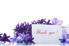 Spring blooming hyacinth with gratitude card Stock Images